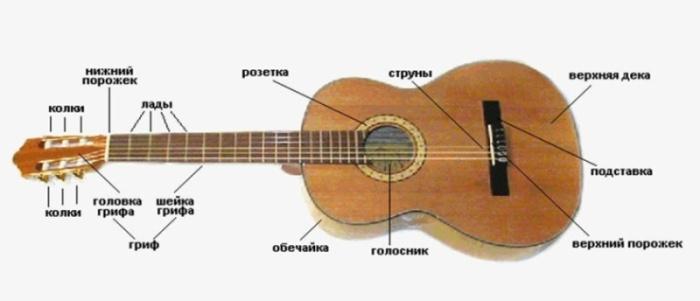 Схема строения гитары